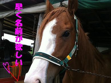 $シリウス-名前なし馬