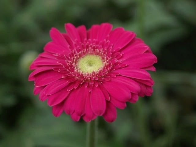 花を売らない花売りのBLOG