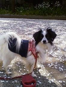 菓子愛好家 なおこ(naoko murayama)のスイーツ&愛犬のブログ
