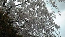 中居くんのほのぼの日記☆with KAT-TUN-DVC00093.jpg
