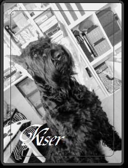 Le ange dechu Noir=Kaiser
