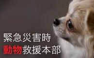 愛しい大切な命-緊急災害時動物救援本部