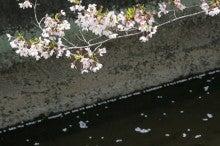 しろうちゃんの写真館-20110410桜06