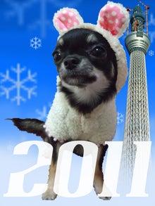 $*。*。*。らむブロ*。*。*。~☆Happy Chihuahua Life☆~