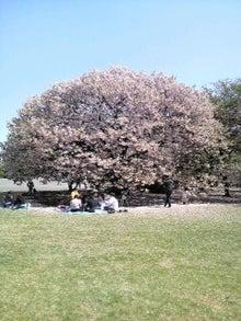 日々 更に駆け引き-桜2