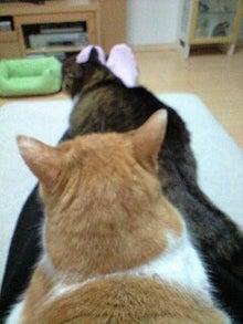 ずれずれブログ…湘南で猫と暮らせば…-110425_2108~0001.jpg