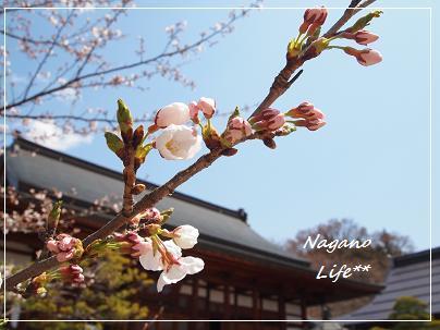 Nagano Life**-つぼみ