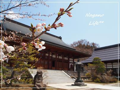 Nagano Life**-お寺
