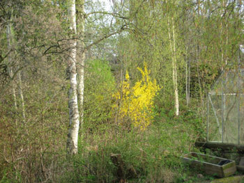 北欧からコンニチワ-春11・11