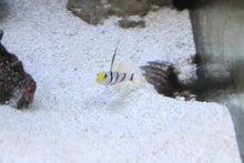 なおの海水魚ブログ