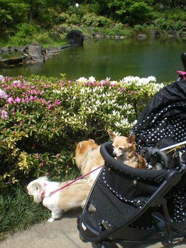 漫画家の犬たち-毛利庭園