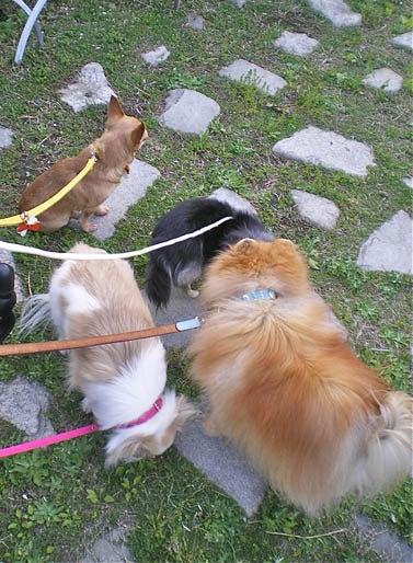 漫画家の犬たち-4毛玉