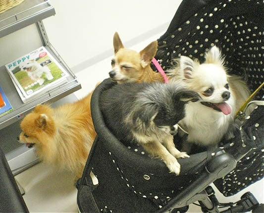 漫画家の犬たち-動物病院