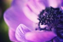 Happy Life*-anemone
