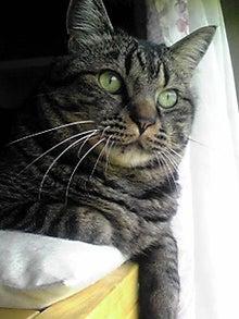 猫マンガ  「猫11匹といれば」 -110429_1106~02.JPG