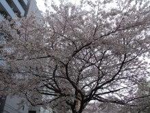 ウチはウチ!!! Re:born-2011桜12