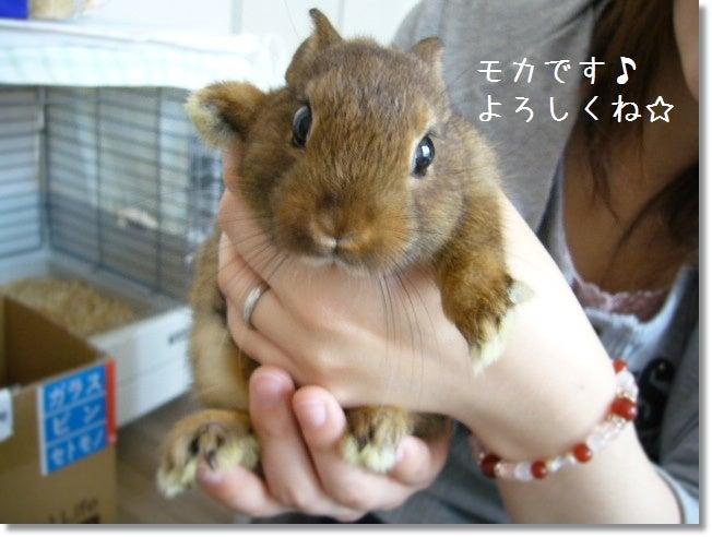 $★Chiru's Diary★ ~うさ飼い夫婦の赤ちゃん待ち日記~