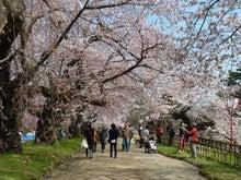 津軽徒然-弘前公園20110430