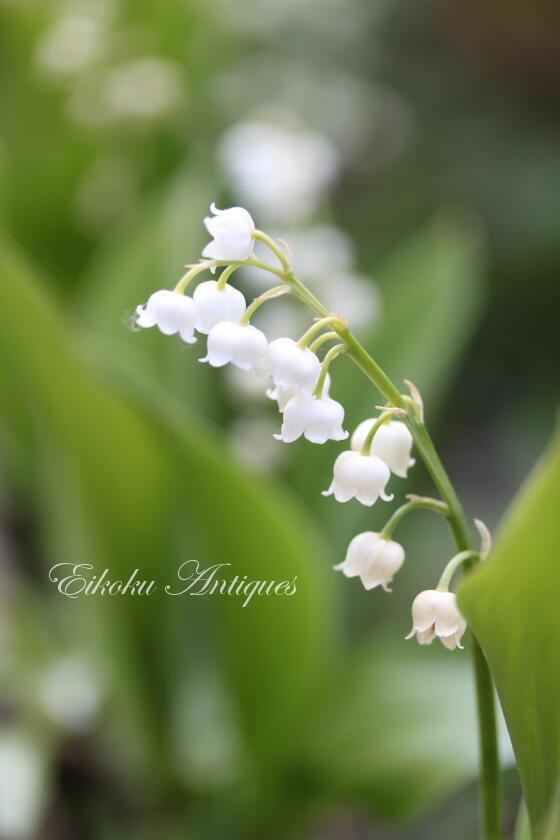 英国アンティークス・オフィシャルブログ-Lily of the valley