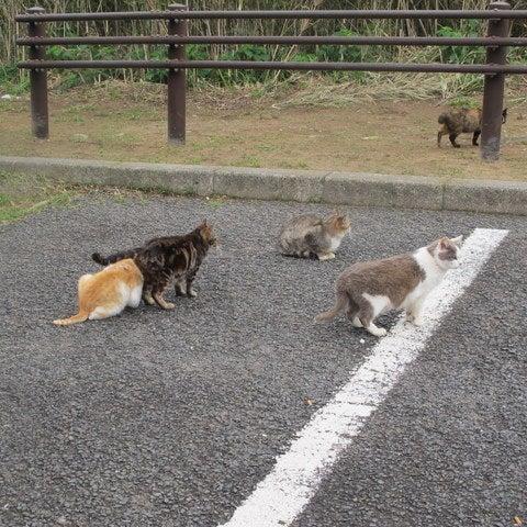 坂の途中で猫日記