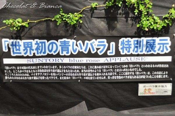 イタグレ ショコラ&ビアンカ-4604