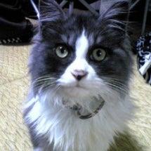 猫好きの皆さんへ。マ…