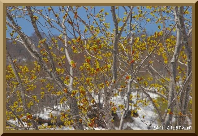 ロフトで綴る山と山スキー-0507_1104