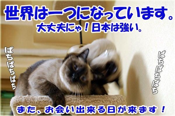 $シャム猫 ちょこ と さすけ の爆笑日記