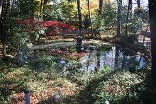 東條的世界最古の国へようこそ-調神社5