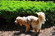 キングレトリバー 珍犬 「とらじ」の成長記録♪
