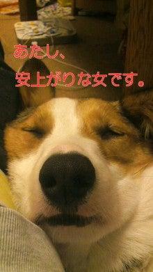 もっふもふ♪blog-110327_2219~0100010001.jpg