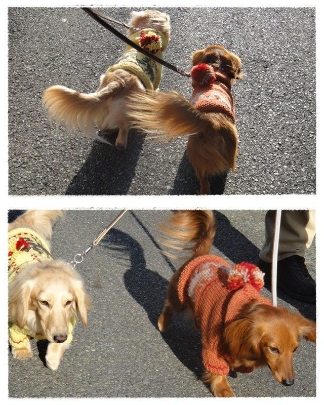 旅犬Lani&Leaのほほん風船記-TAKIEYにて