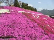 手軽に登れて満足度100%の山-芝桜