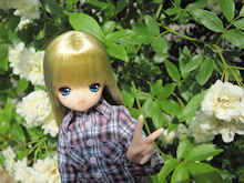 リアンのなんとなくブログ-バラが咲いた