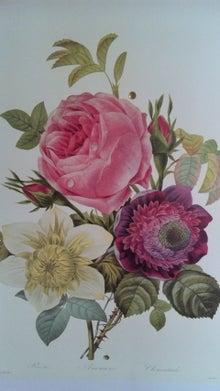 オカメインコのももちゃんと花教室と旅日記-110509_124428.jpg