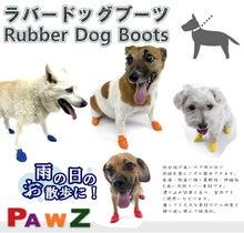 犬の靴のシェットランドハウス スタッフBlog