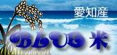 愛知産 BLUE米