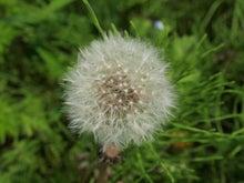 かっちゃんの日記-植物
