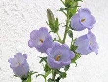 片山結花のお花やさんDiary ☆・。.+     YukakatayamaOfficial Blog