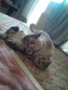 ウサ猫とポチャ猫-20110504123552.jpg