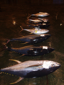 沖縄から遊漁船「アユナ丸」-1月の釣果