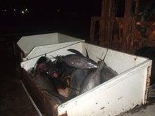 沖縄から遊漁船「アユナ丸」-2月の釣果