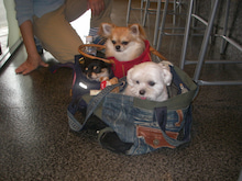 宝塚のペット美容☆犬バカトリマーのブログ