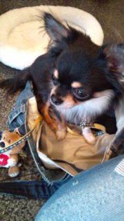 宝塚のペット美容☆犬バカトリマーのブログ-20110516173016.jpg