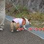 5/5 笠間 炎陶祭…