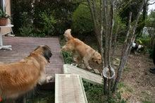 緊急ペット同伴被災者受入情報配信中 旅犬大好きのぐらんぱう ペット宿ドットコム公式ブログ