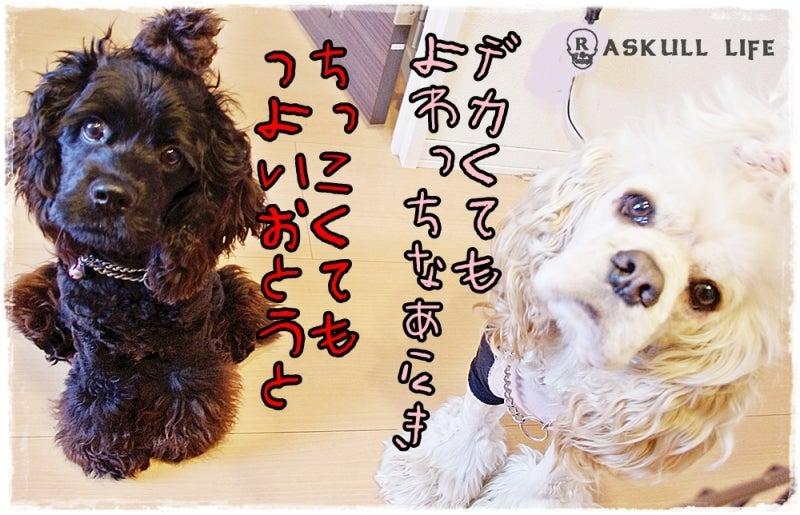 $☆アメコカRAsKULLとのHAPPY LIFE☆