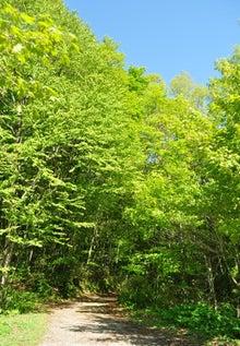 白神山地ツアーで能代山本地区の活性化すっぺ-2011年5月18日の十二湖最新情報4