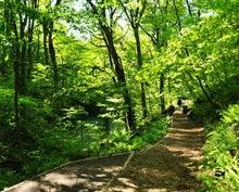 白神山地ツアーで能代山本地区の活性化すっぺ-2011年5月18日の十二湖最新情報5