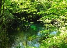 白神山地ツアーで能代山本地区の活性化すっぺ-2011年5月18日の十二湖最新情報6